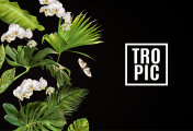 Tropical orchid horizontal banner