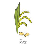 Hand drawn cartoon rice grain