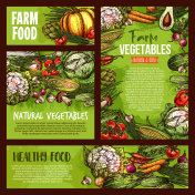 Vector vegetables veggie farm food sketch posters