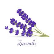 Lavender Flowers in Realistic Style