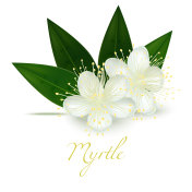 Myrtle Flowers and Leaves in Realistic Style