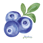 Hand painted watercolor blueberries with leaves
