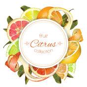 Citrus round banner