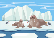 Walrus and seagull on ice