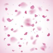 Pink petals background