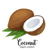 coconut in cartoon style
