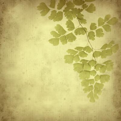 纹理与蕨类植物的旧纸张背景。