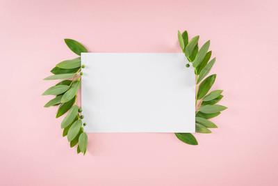 绿色的叶子的空白卡
