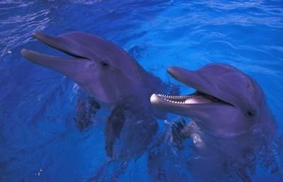 站在水中的海豚