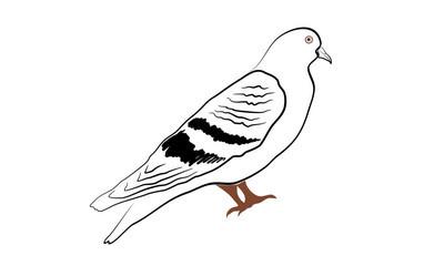 鸽子矢量插图剪影