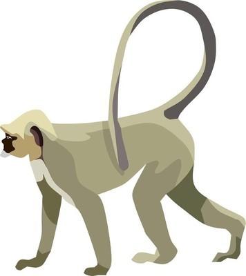 灰猴动物矢量插画