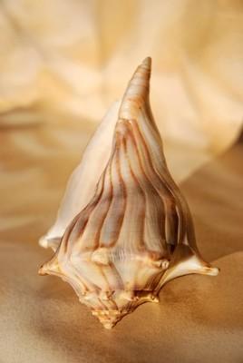 大的棕色壳