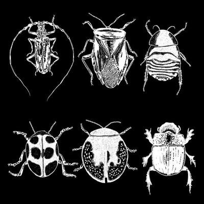 昆虫的点画图纸集分离