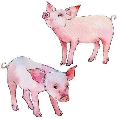 在水彩风格的猪野生动物隔离