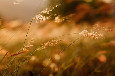 日落的小草和野花