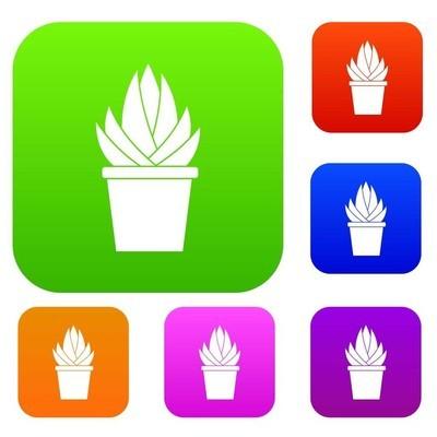 芦荟植物集色系列