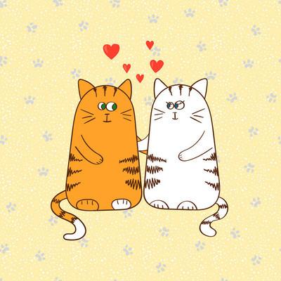 在爱的可爱猫