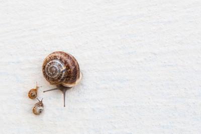 一只有小蜗牛的大葡萄蜗牛沿着白色的纹理表面爬行。