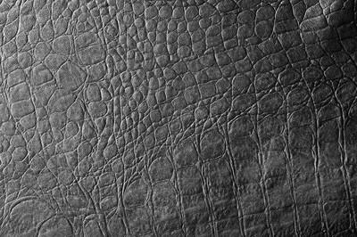 皮肤黑的鳄鱼。纹理