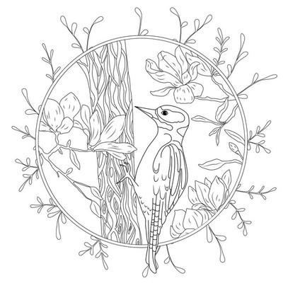 程式化的卡通啄木鸟在树枝上。手为成人的抗应激彩页的的素描画