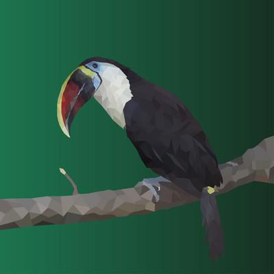 树枝上的多边形巨嘴鸟