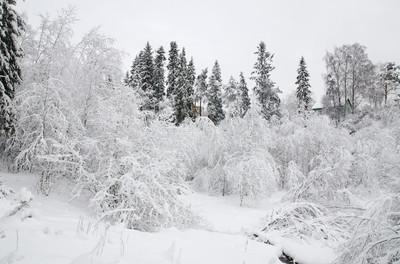 树木的雪 4