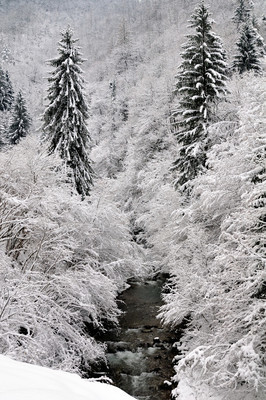 雪盖的森林