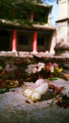 清明节一场雨,花都掉光了……