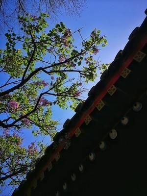 清明节手机拍摄于北京广济寺