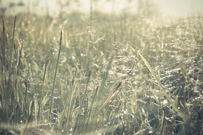 Morning sunrise on  spring grass field with dew water drops