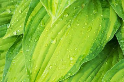 绿色的叶子的植物与水滴