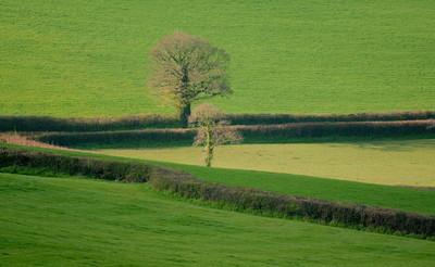 农业景观的农田