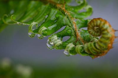 雨水落在一株蕨类植物