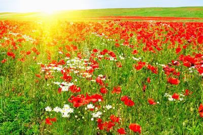 精彩草甸夏天的清晨