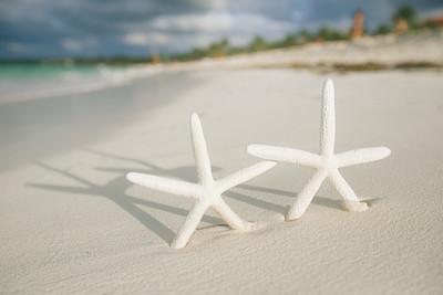 白色在白色沙滩上的海星
