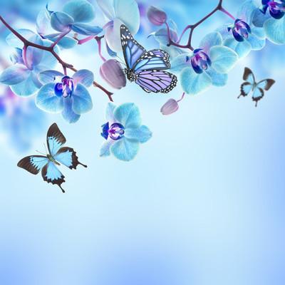 热带兰花与蝴蝶花卉背景