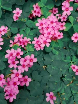 小草花也有春天。