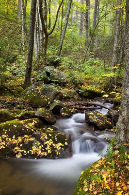 在数控森林溪