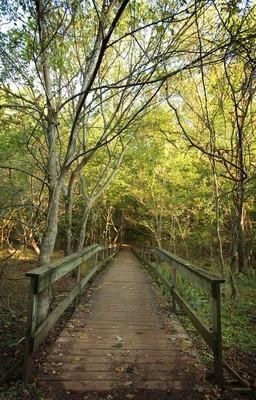 在森林里的木制桥