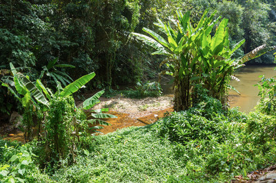 东南亚的热带丛林