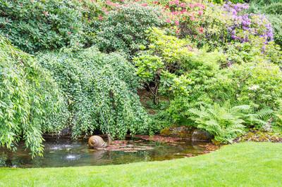 绿色的树木和蕨类植物周围小池塘