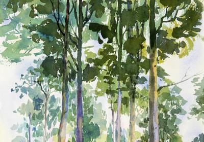环境概念, 树在森林里