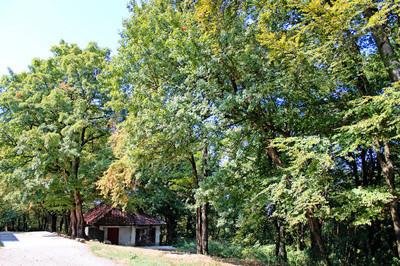 在森林里的房子