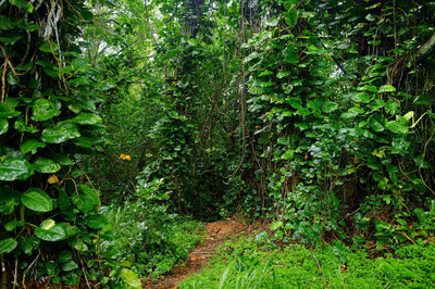 在考艾岛卡拉劳步道