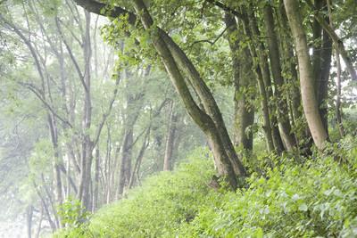 树木和植被
