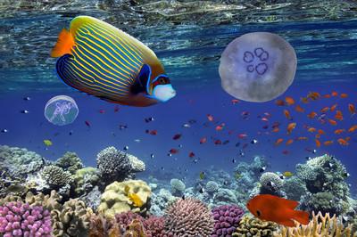 热带鱼类和硬珊瑚在红海埃及