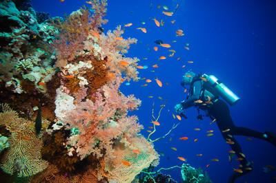 深海潜水、 热带鱼和珊瑚礁