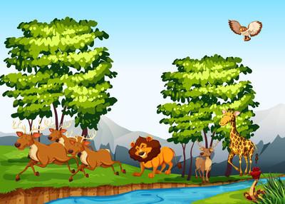 在白天在森林中的野生动物