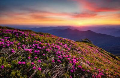 山在花开花和日出。美丽的自然风景在夏天时间