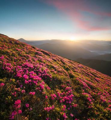 在日出时山中飘落。美丽的自然景观,在夏季时间